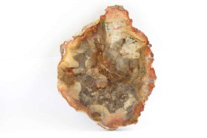 Legno fossile Madagascar